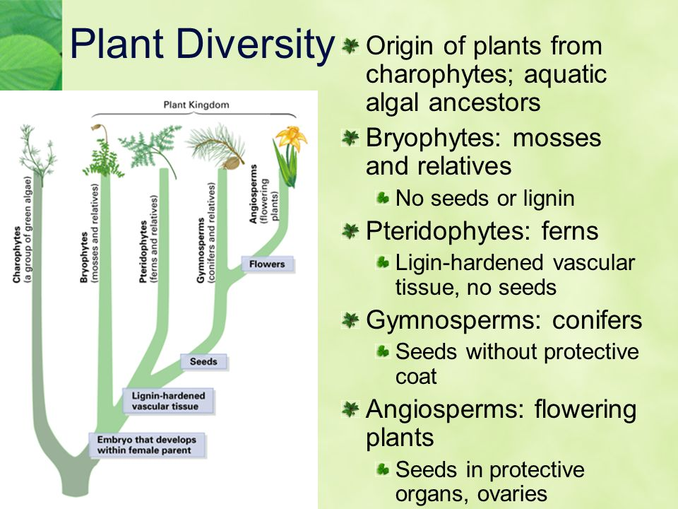 Chapter 19 Plant Diversity Ppt Download