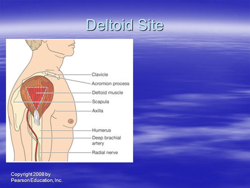 Deltoid Site Copyright 2008 by Pearson Education, Inc.