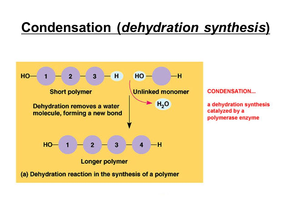 Condensation (dehydration synthesis)