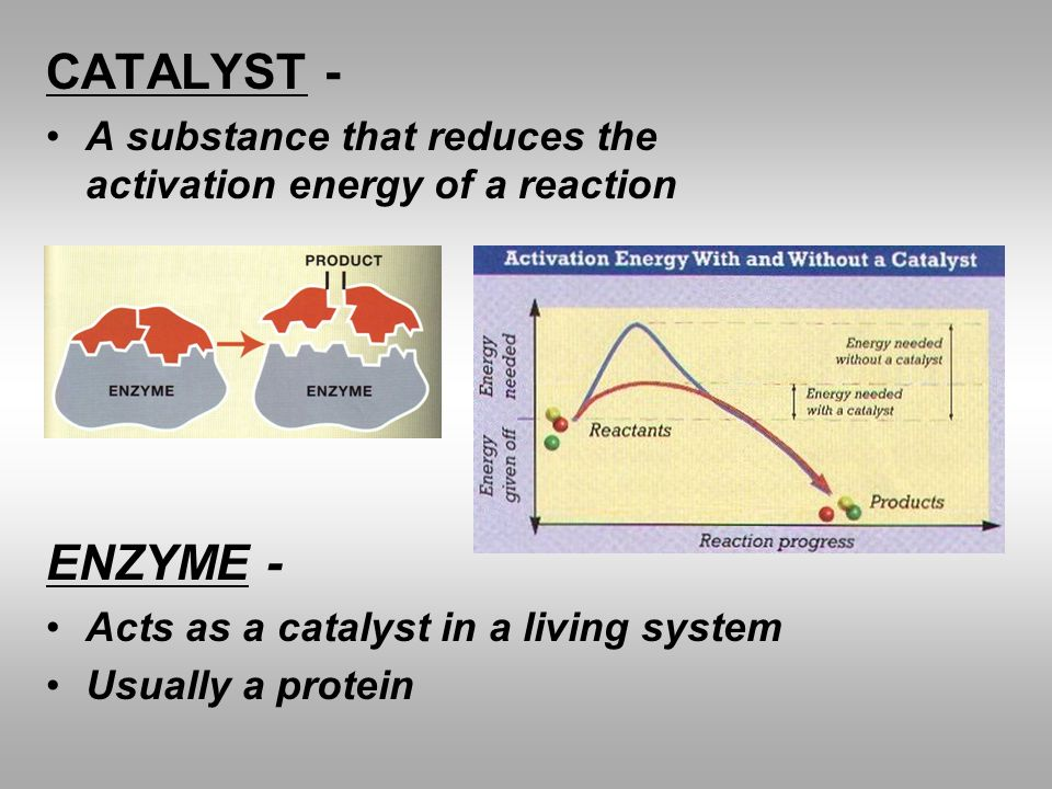 CATALYST - A substance that reduces the activation energy of a reaction. ENZYME - Acts as a catalyst in a living system.