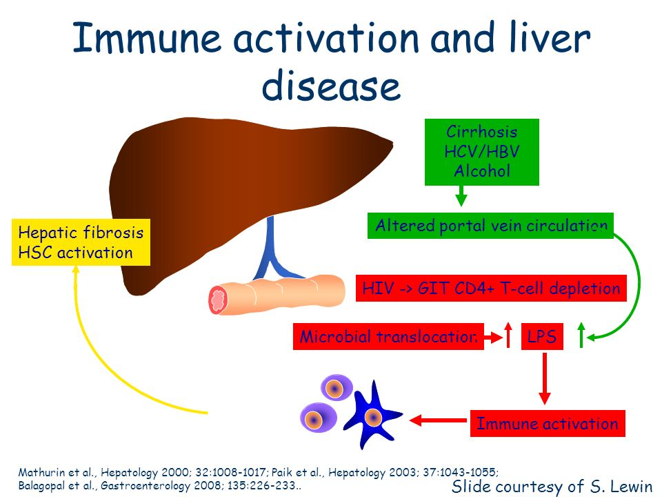Immune activation and liver disease