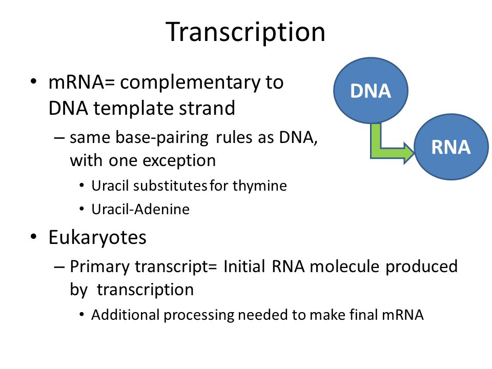 Chapter 17 from gene to protein ppt video online download transcription mrna complementary to dna template strand dna rna maxwellsz