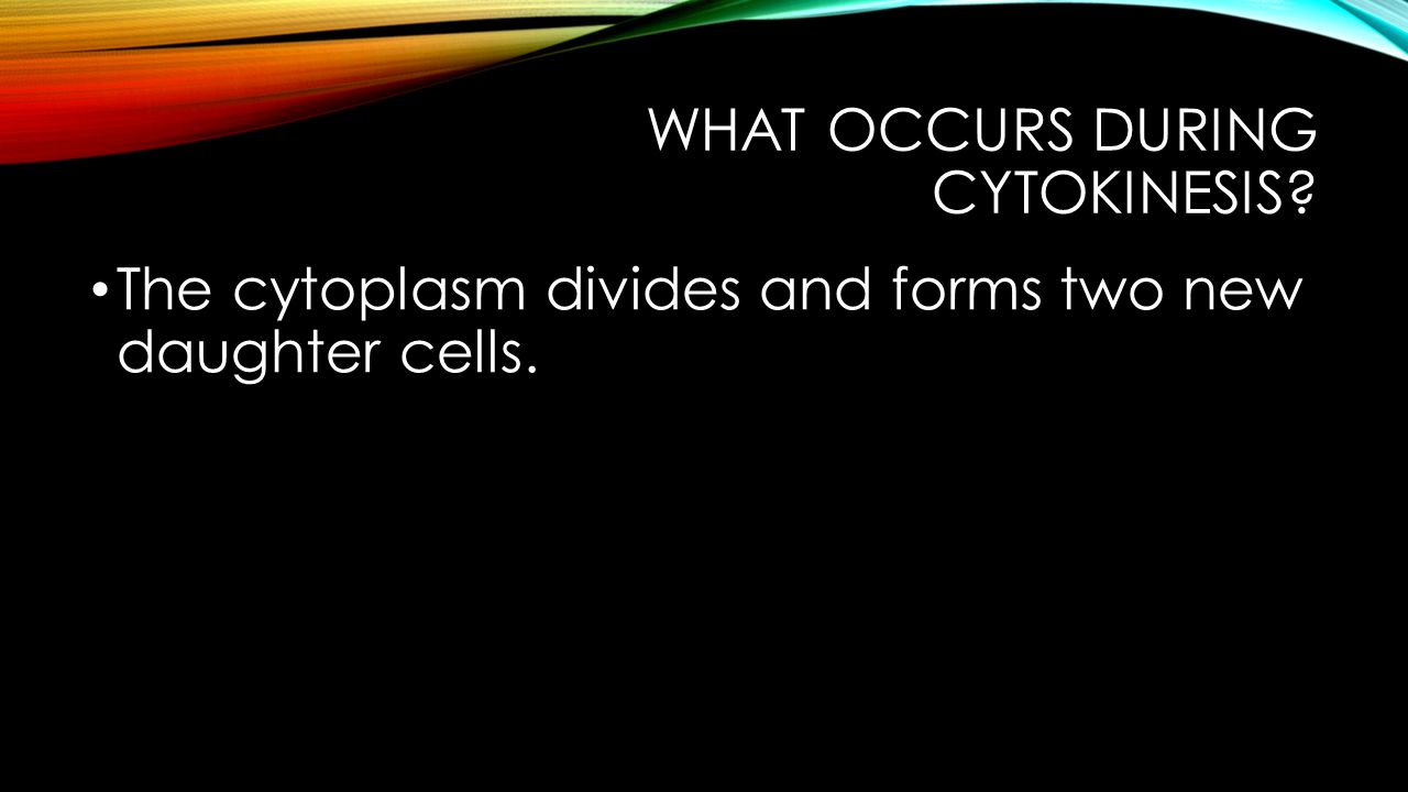 What occurs during cytokinesis