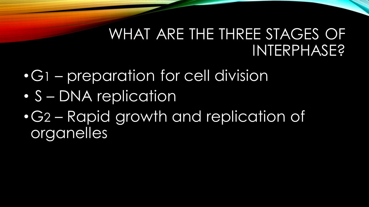 What are the three stages of Interphase