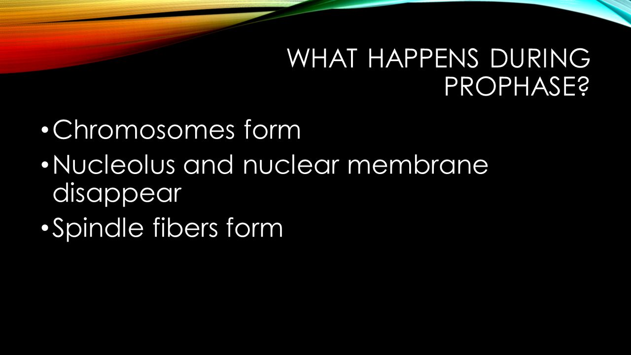 What happens during prophase
