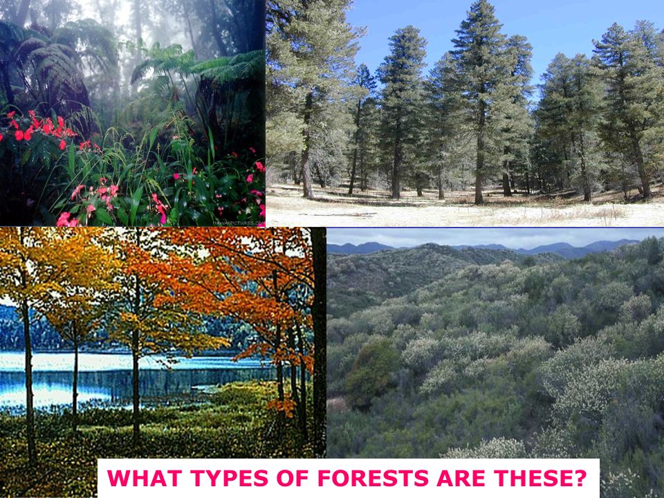 WHAT TYPES OF FORESTS ARE THESE