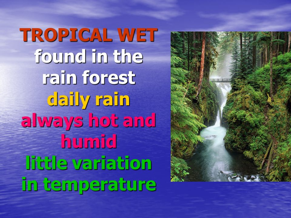 TROPICAL WET found in the rain forest daily rain always hot and humid little variation in temperature