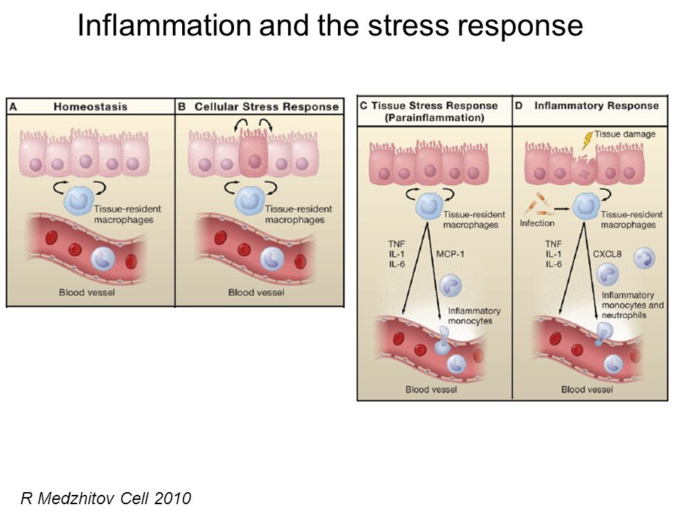 Inflammation and the stress response