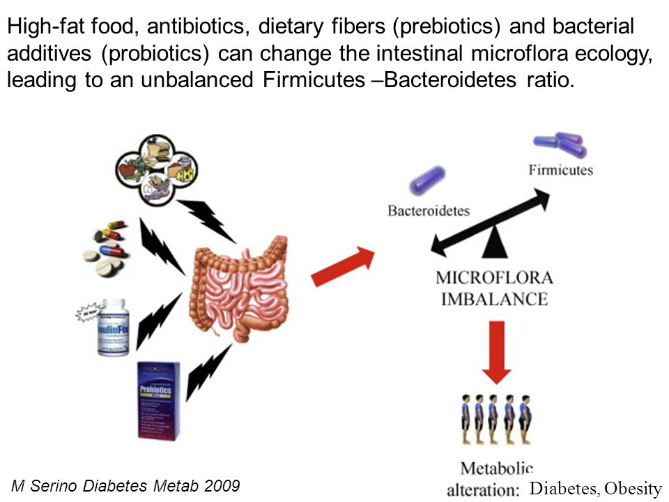 High-fat food, antibiotics, dietary fibers (prebiotics) and bacterial additives (probiotics) can change the intestinal microflora ecology, leading to an unbalanced Firmicutes –Bacteroidetes ratio.