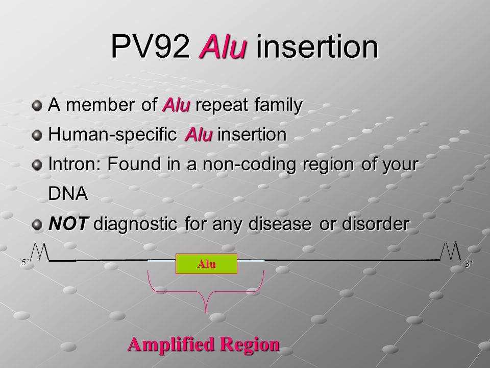PV92 Alu insertion Amplified Region A member of Alu repeat family