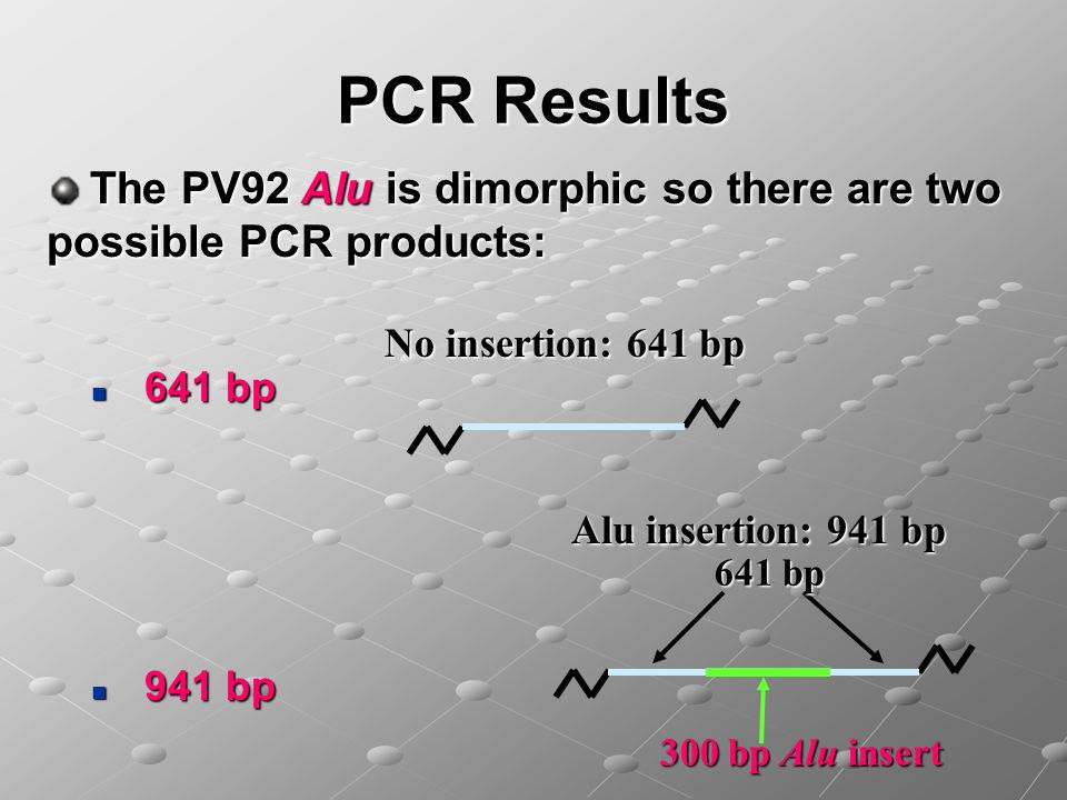 PCR Results The PV92 Alu is dimorphic so there are two possible PCR products: No insertion: 641 bp.