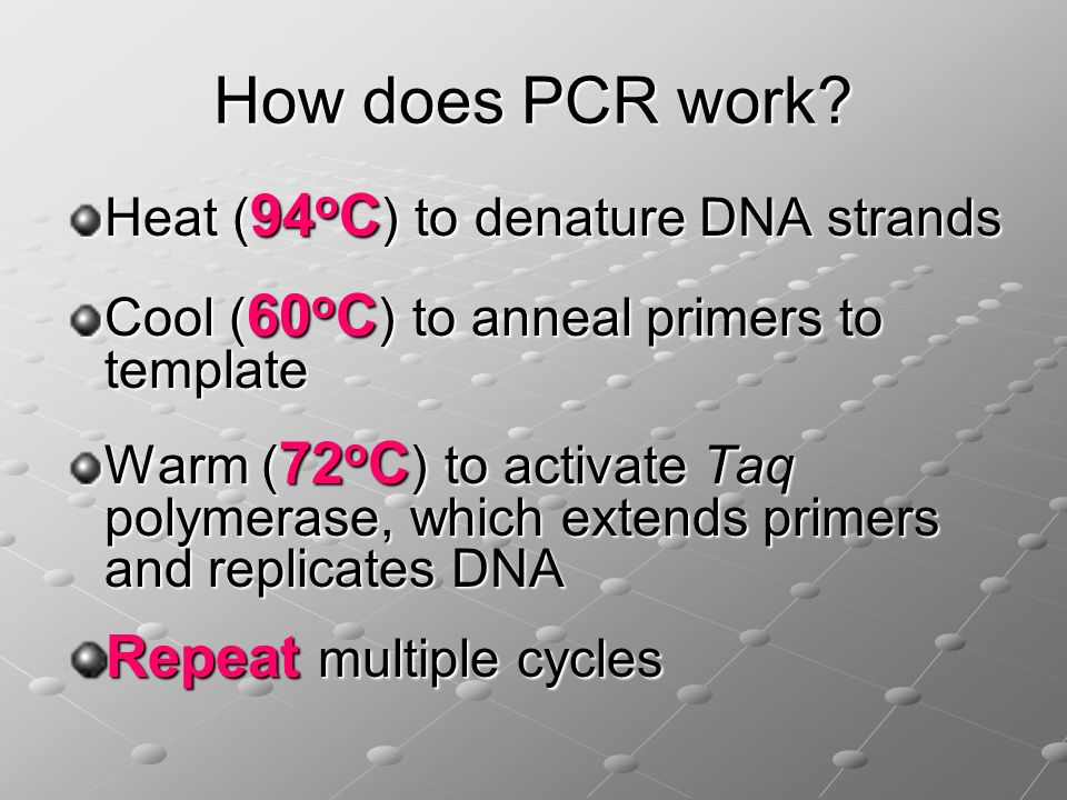 How does PCR work Repeat multiple cycles