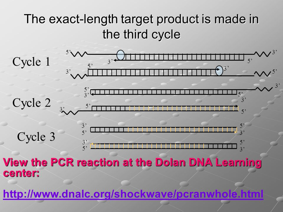 The exact-length target product is made in the third cycle