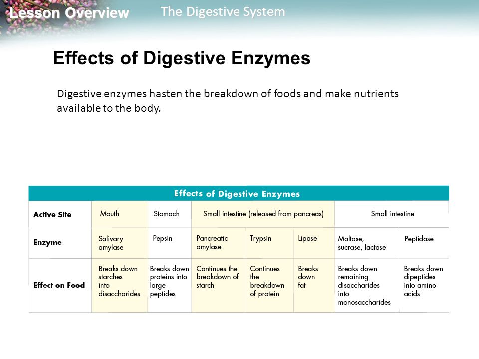 Effects of Digestive Enzymes