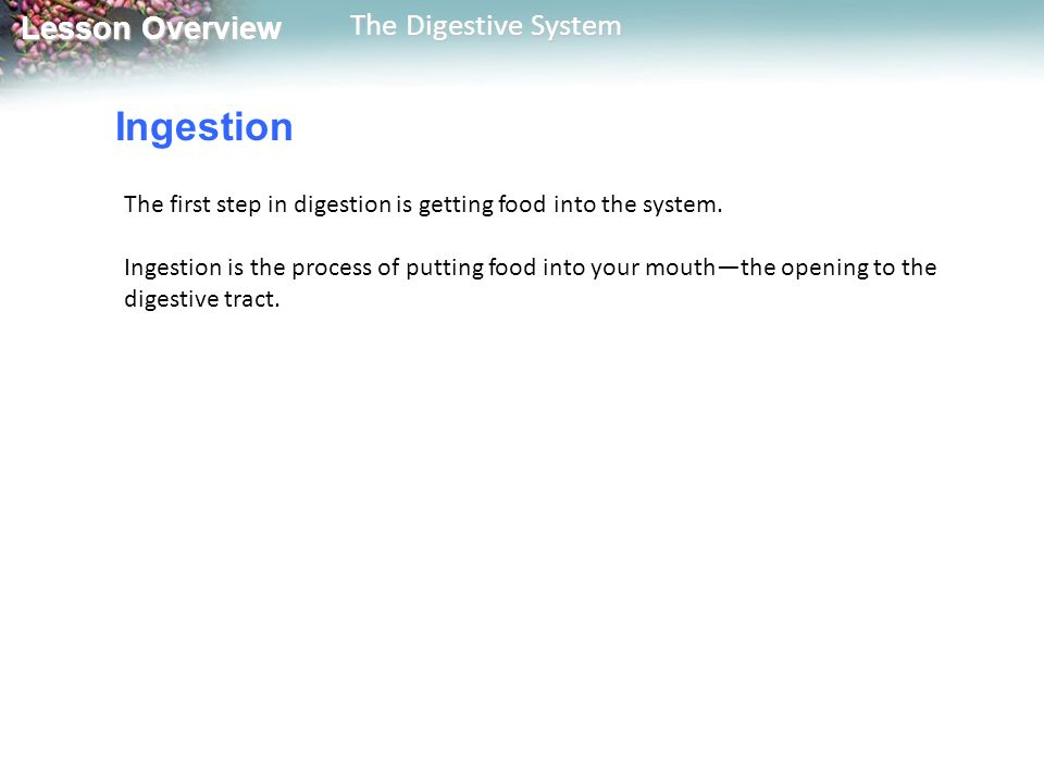 Ingestion The first step in digestion is getting food into the system.
