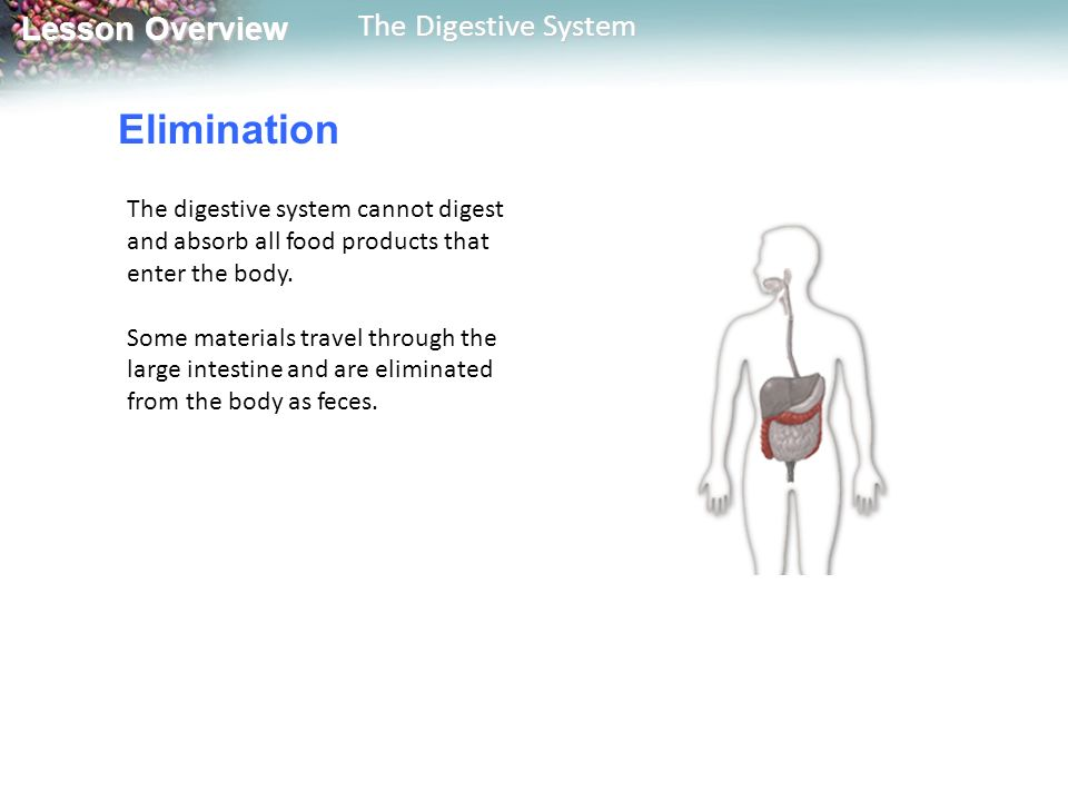 Elimination The digestive system cannot digest and absorb all food products that enter the body.