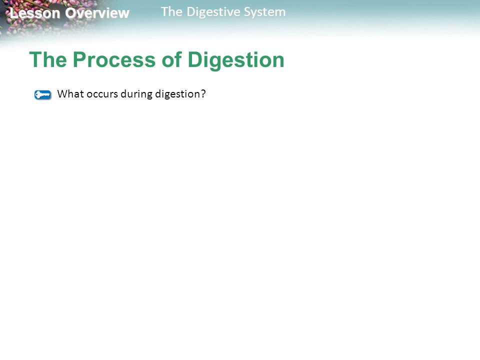 The Process of Digestion