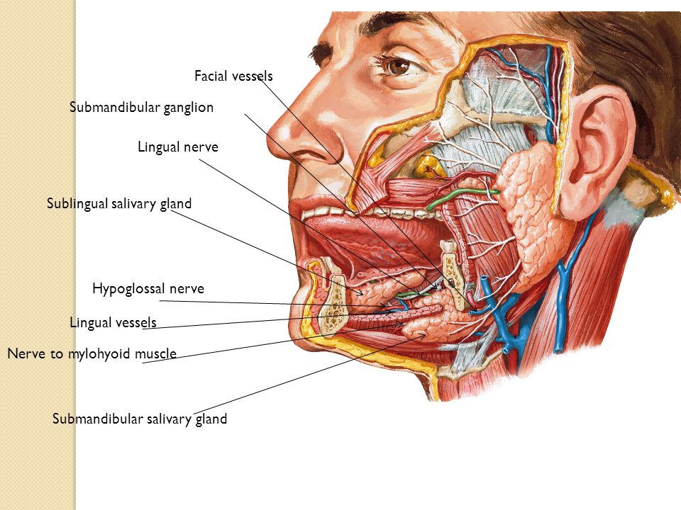 The Neck by Prof. S. Malik, ProF. Wagner+ Dr. Ayat - ppt video ...