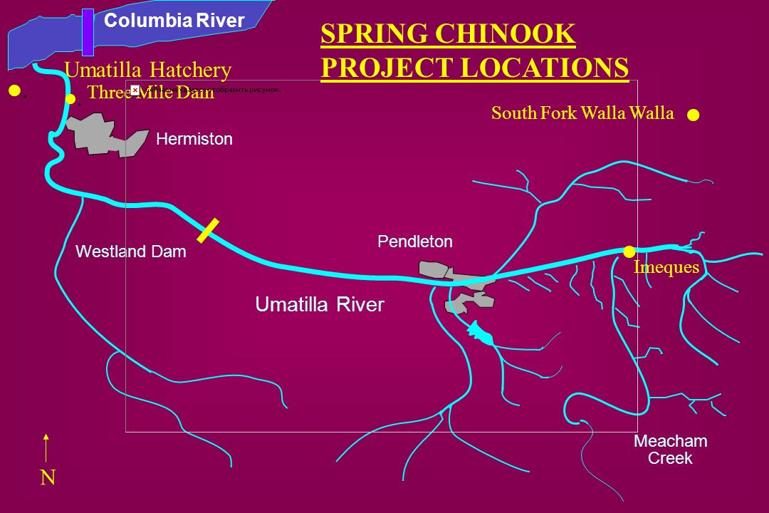 . . SPRING CHINOOK PROJECT LOCATIONS . Umatilla Hatchery . N