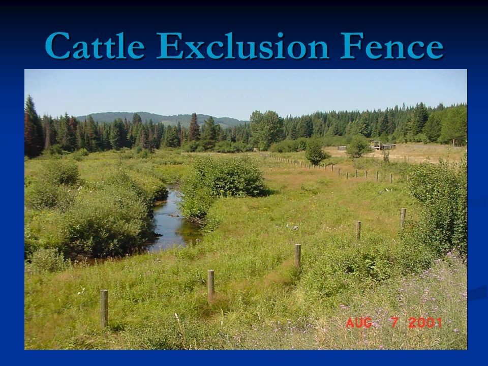 Cattle Exclusion Fence
