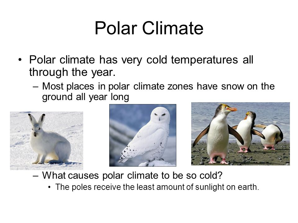 Polar Climate Polar climate has very cold temperatures all through the year.