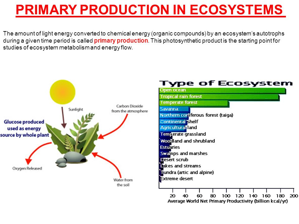 Global Food Production Definition