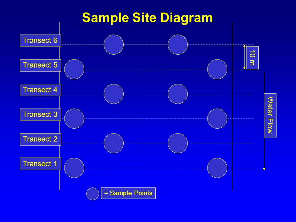 Sample Site Diagram Transect 6 10 m Transect 5 Transect 4 Water Flow
