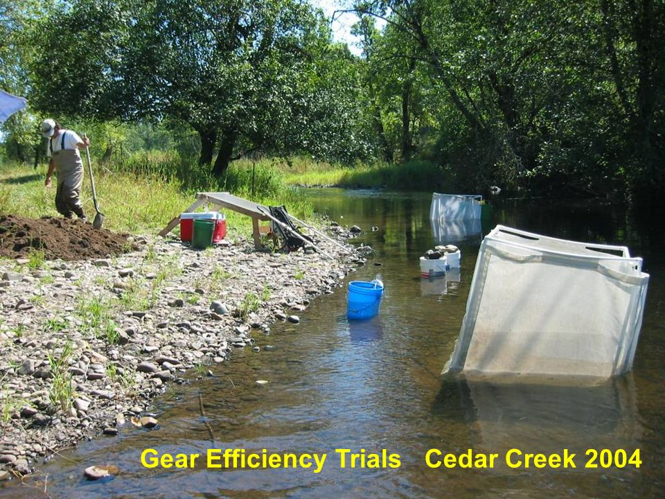 Gear Efficiency Ability to get sufficient test fish for trials