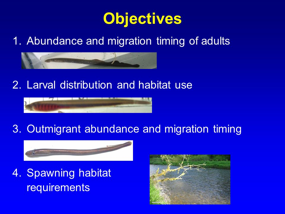 Objectives Abundance and migration timing of adults