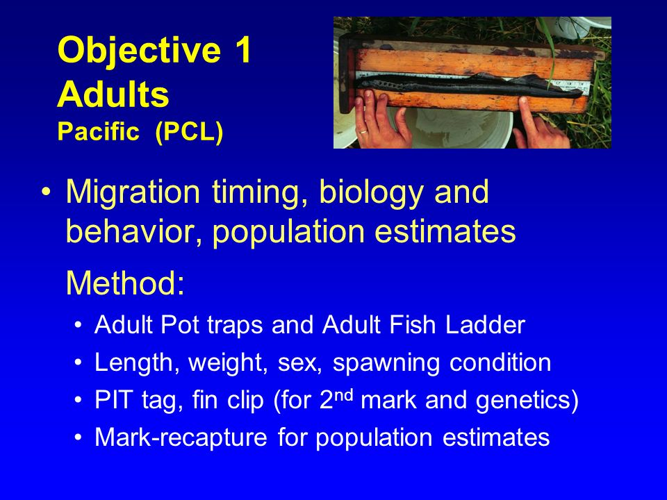 Objective 1 Adults Pacific (PCL)