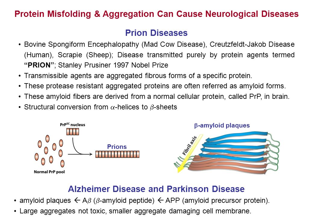 bse protein misfolding and aggregation
