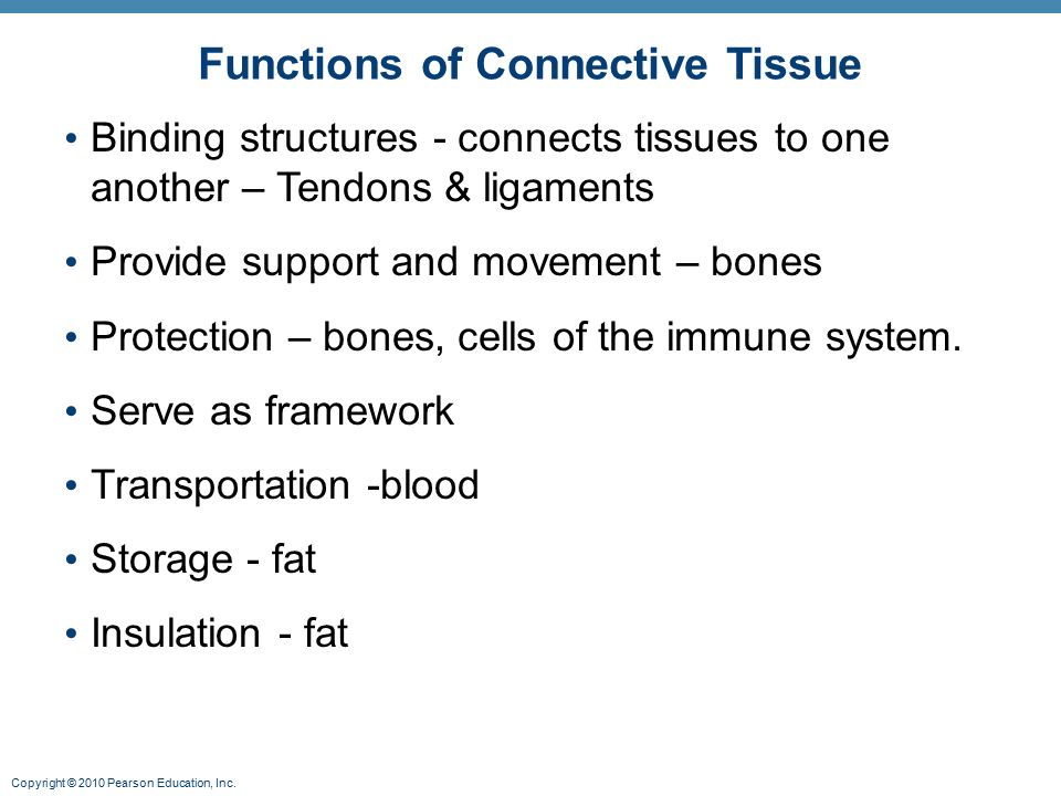 functions of connective tissue Connective tissue (ct) is one of the four basic types of animal tissue, along with epithelial tissue, muscle tissue, and nervous tissue it develops from the mesoderm connective tissue is found in between other tissues everywhere in the body, including the nervous system in the central nervous system, the three outer membranes (the meninges.