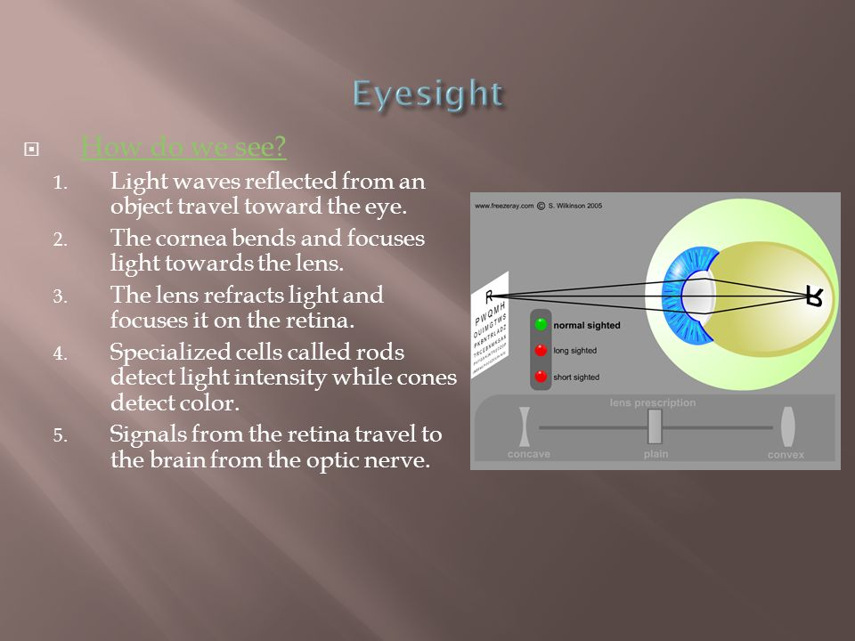 Eyesight How do we see Light waves reflected from an object travel toward the eye. The cornea bends and focuses light towards the lens.