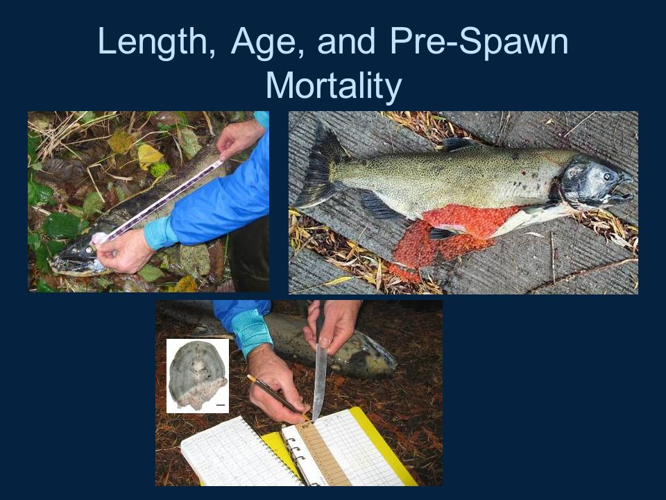 Length, Age, and Pre-Spawn Mortality