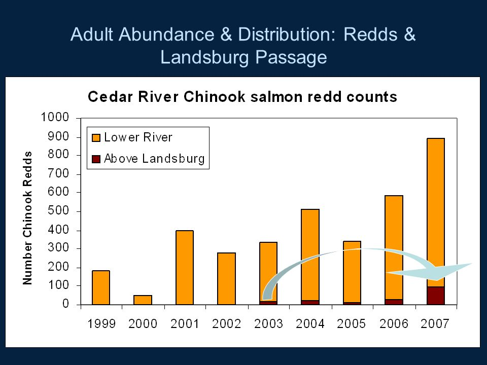 Adult Abundance & Distribution: Redds & Landsburg Passage