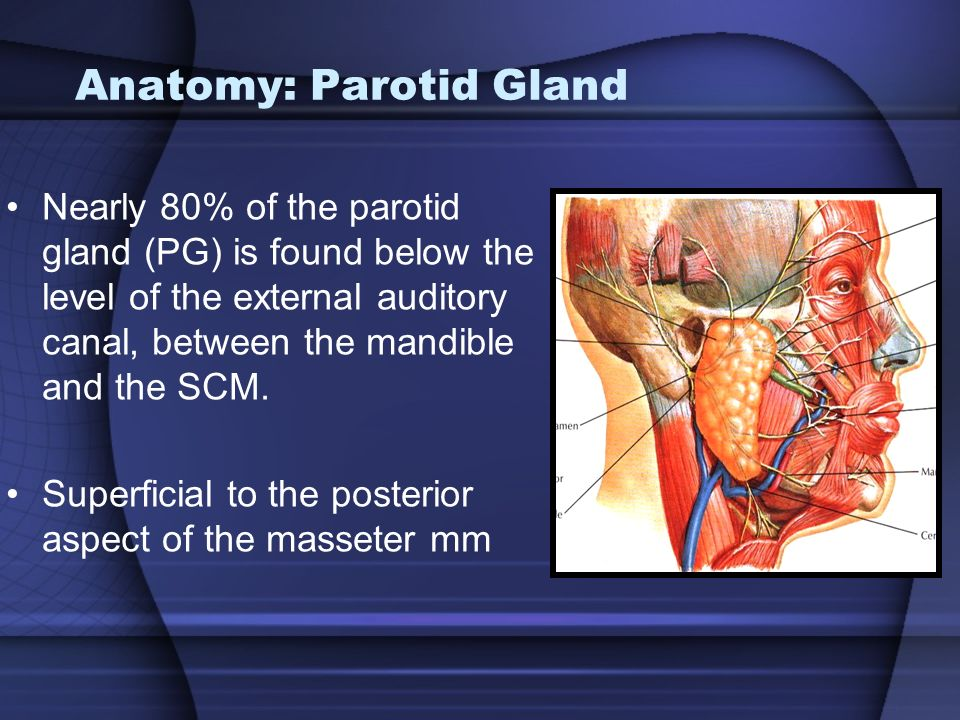 IN THE NAME OF GOD Salivary Glands Dr.S.A.Mirvakili. - ppt video ...