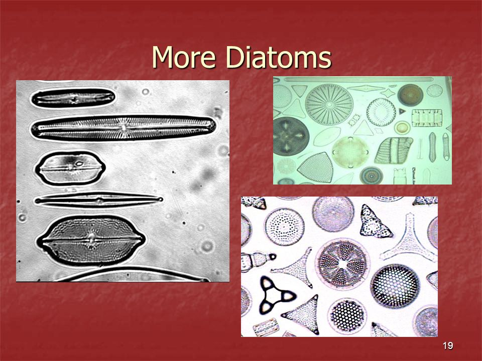 More Diatoms
