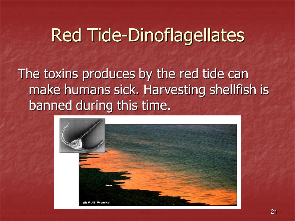 Red Tide-Dinoflagellates
