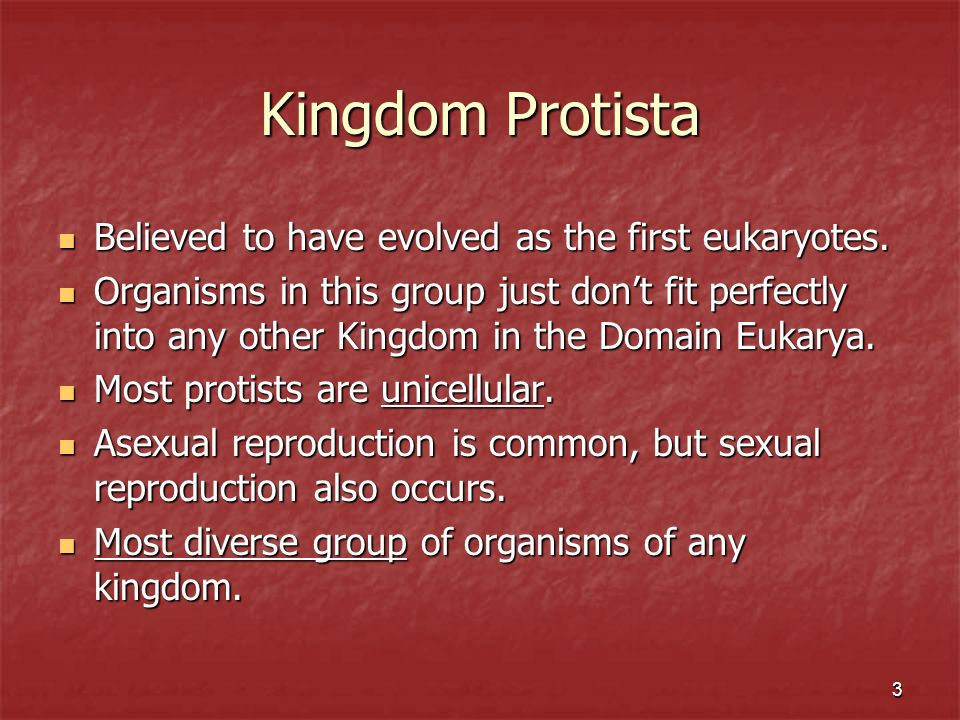 Kingdom Protista Believed to have evolved as the first eukaryotes.