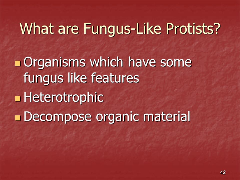 What are Fungus-Like Protists
