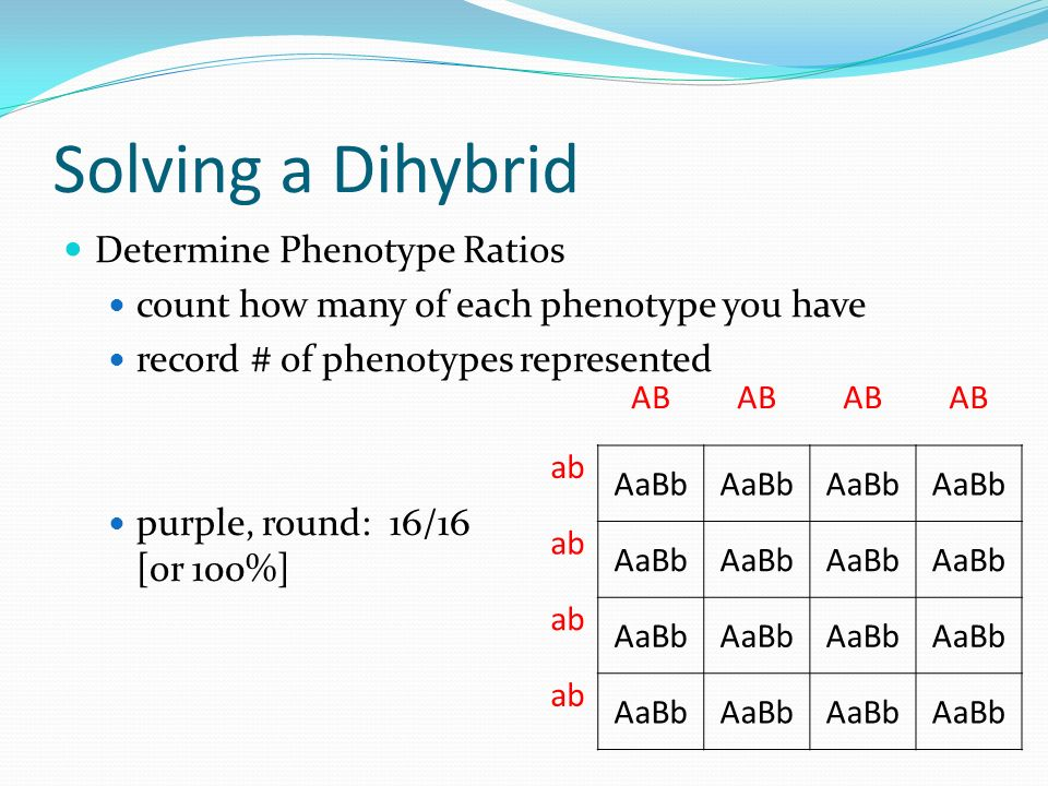 Solving a Dihybrid Determine Phenotype Ratios