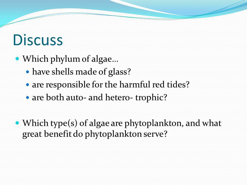 Discuss Which phylum of algae… have shells made of glass
