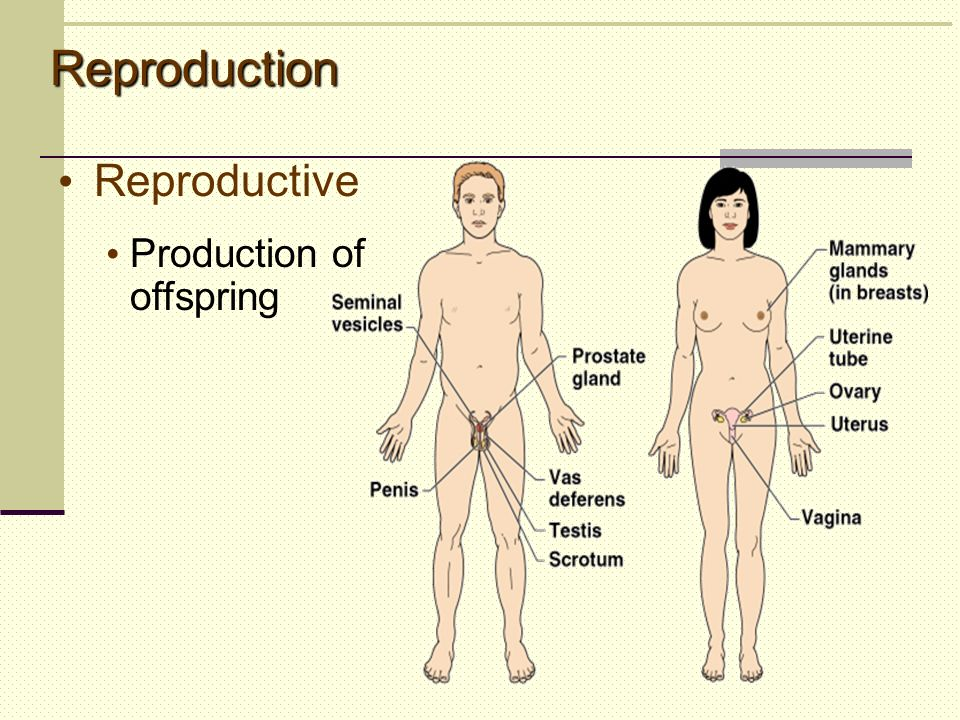Reproduction Reproductive Production of offspring