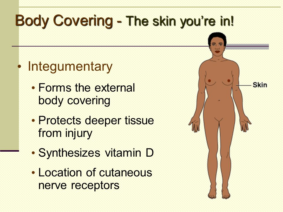 Body Covering - The skin you're in!