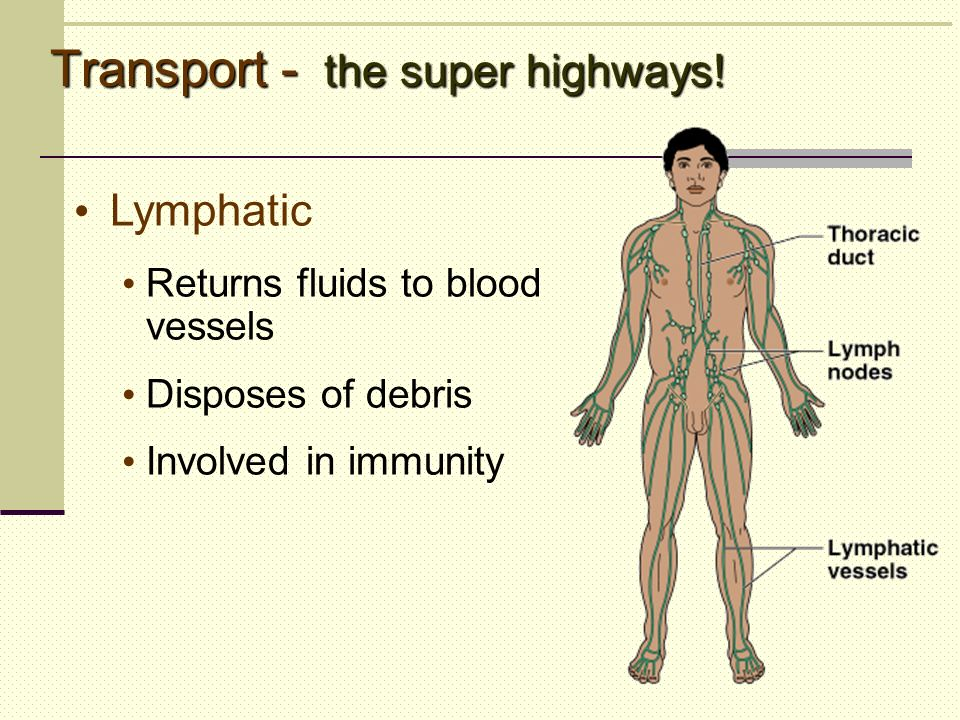 Transport - the super highways!