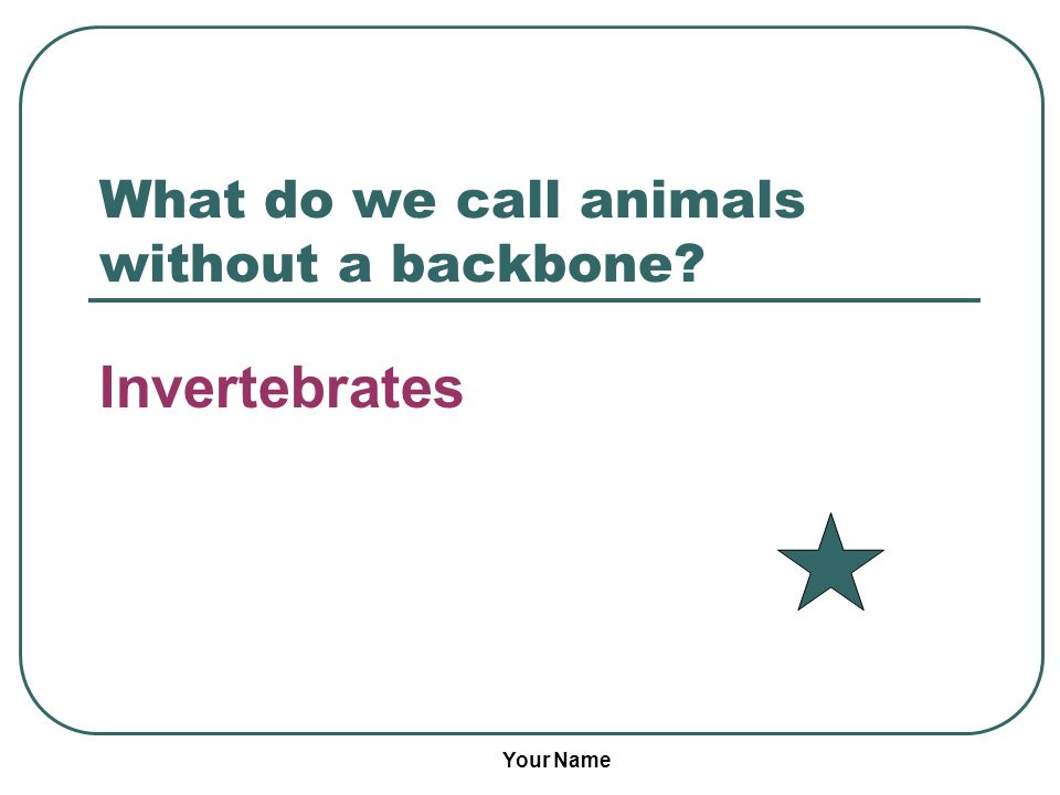What do we call animals without a backbone