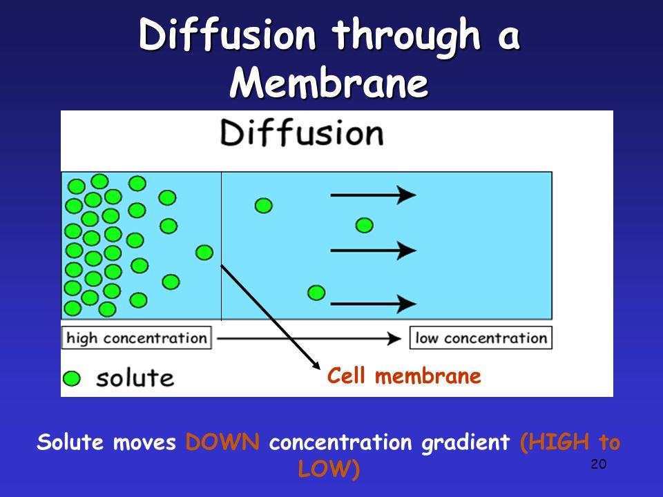 Diffusion through a Membrane