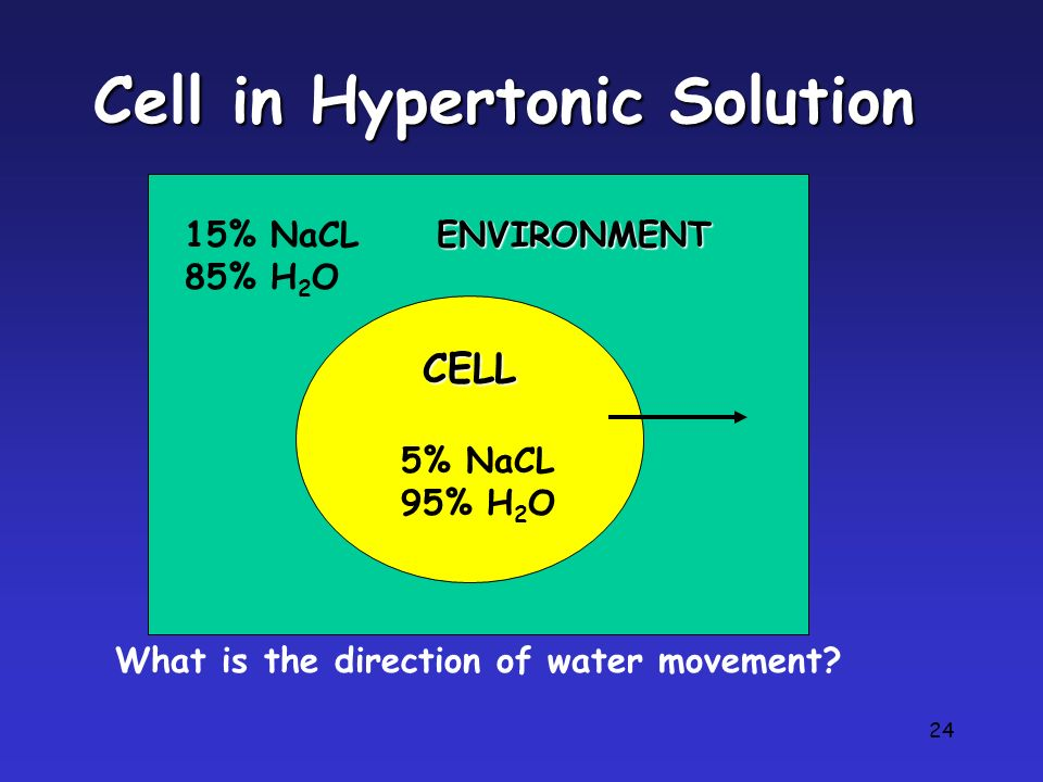 Cell in Hypertonic Solution