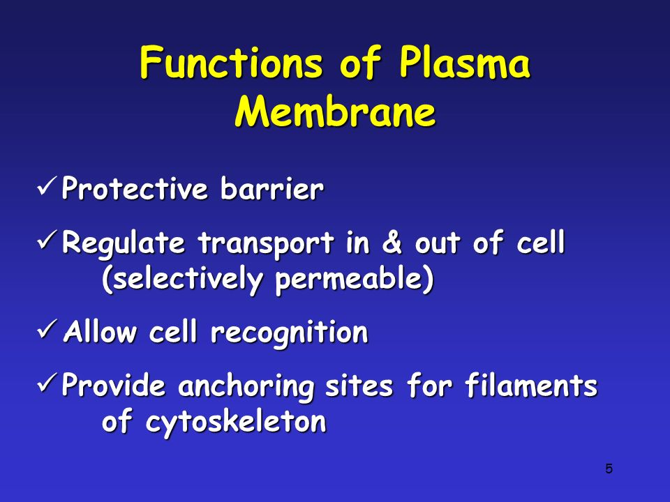 Functions of Plasma Membrane