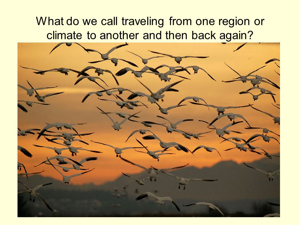 What do we call traveling from one region or climate to another and then back again